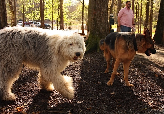 Dog Parks In Dunwoody Ga