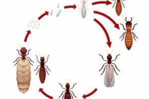 Second Opinion Termite & Pest Control: 4344 Nansemond Pkwy, Suffolk, VA