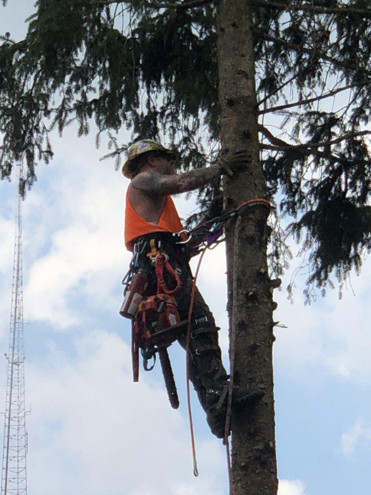 Northmen Excavating & Tree Service: Washington, PA