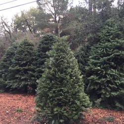 photo of boy scout troop 224 christmas tree lot lafayette ca united states - Boy Scout Christmas Trees
