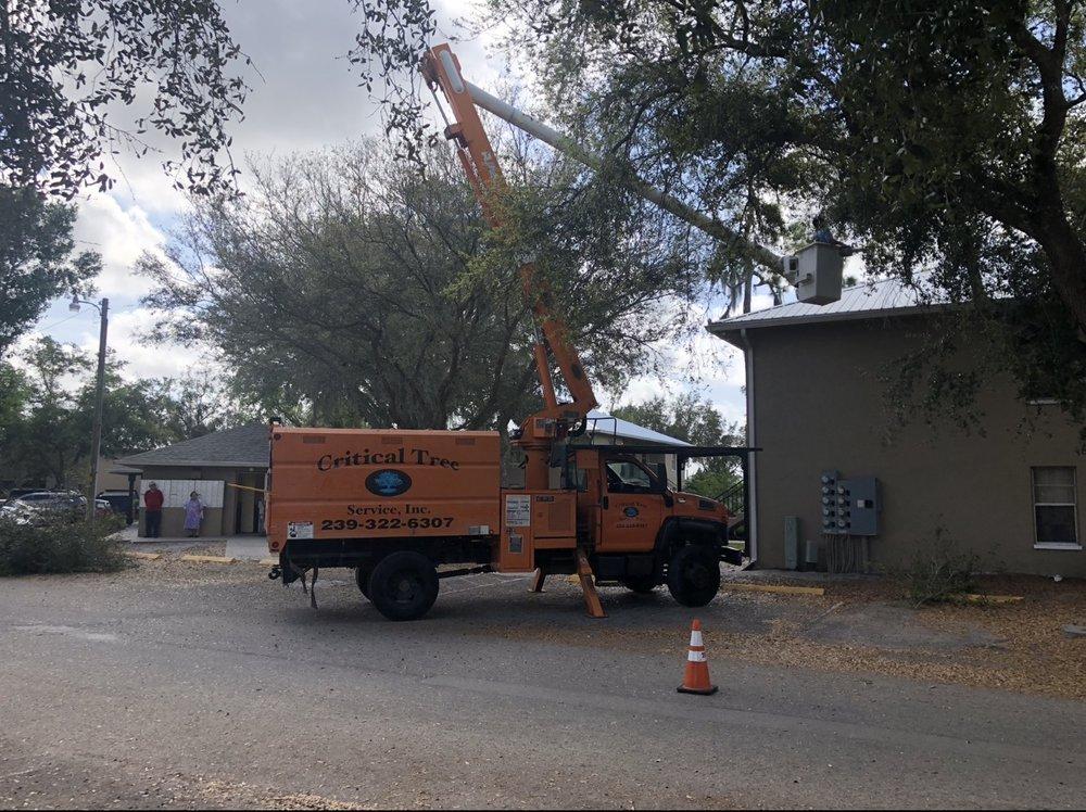 Critical Tree Service: Lehigh Acres, FL