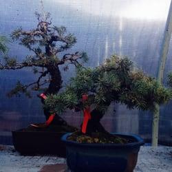 Photo Of Colorado Bonsai Denver Co United States Black Pine And Rocky
