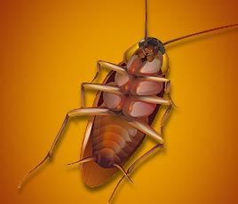 All Houston Pest Control: 2021 Aldine Mail Rt, Houston, TX