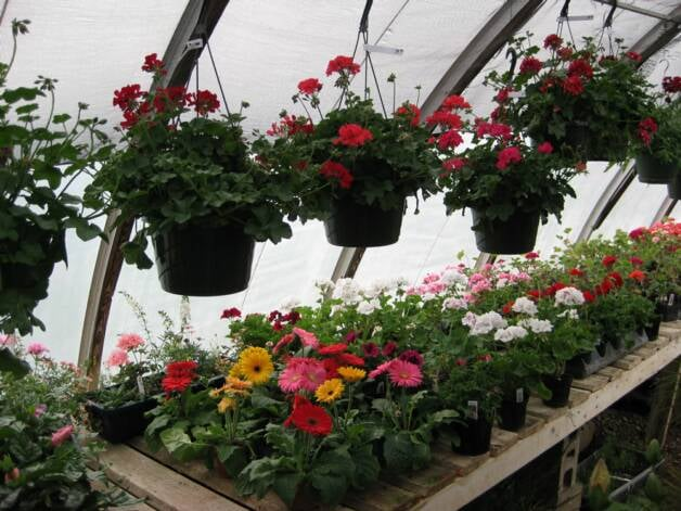 Village Green Florists and Greenhouse: 301 W 3rd St, Lakefield, MN