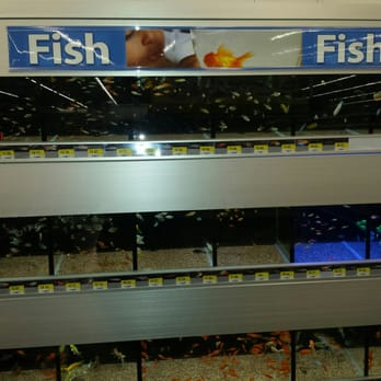 photo of walmart fort lauderdale fl united states well stocked aquarium
