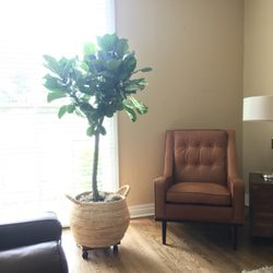 Photo Of Sunshine Miniature Trees Dallas Tx United States Fig Tree