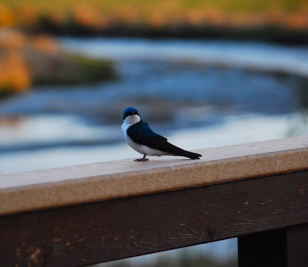 Potter Marsh Wildlife Viewing Boardwalk