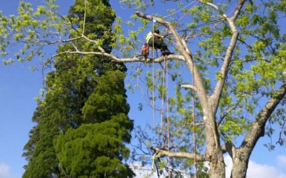 Designer Tree Care: Bellview, FL