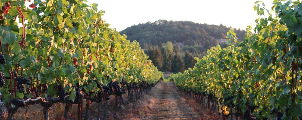 Broadley Vineyards: 265 S 5th, Monroe, OR