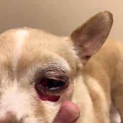 Dirty paws dog wash 14 reviews pet groomers 10217 southpoint photo of dirty paws dog wash fredericksburg va united states severe subconjunctival solutioingenieria Choice Image