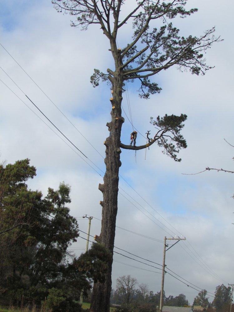 Nelson's Tree Service: Bodega, CA