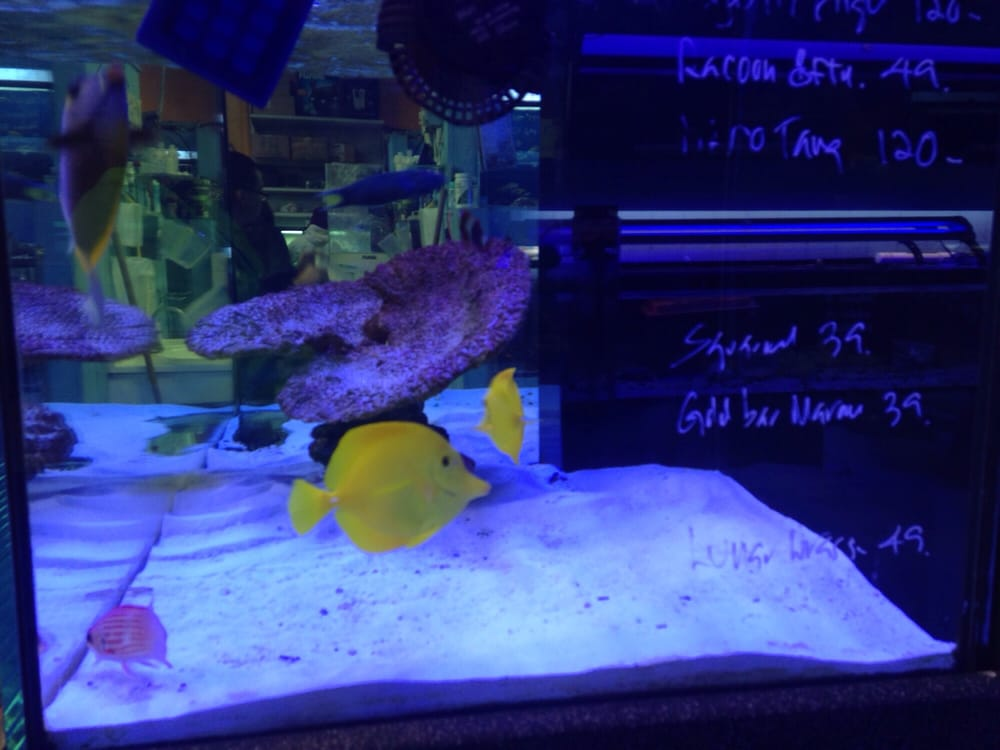 Photos for brea 39 s tropical fish and pets yelp for Exotic fish and pets