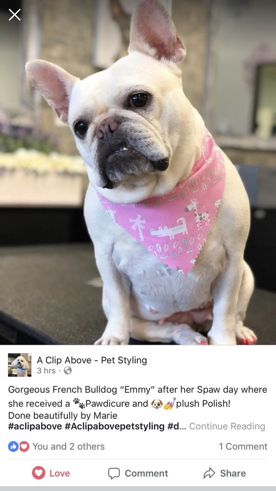 A Cut Above Dog Grooming: 10143 W Chatfield Ave, Littleton, CO