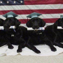 Pensacola Dog Acadmey - Pet Training - 6857 N 9th Ave