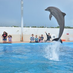 Gulfarium Marine Adventure Park - 232 Photos & 111 Reviews ...