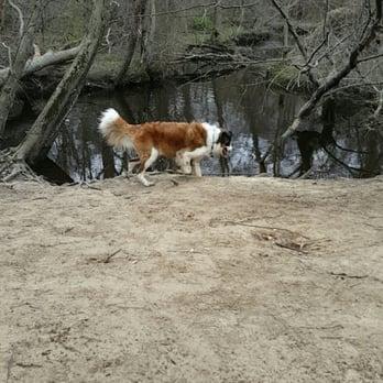 Dog Park Evesham Nj