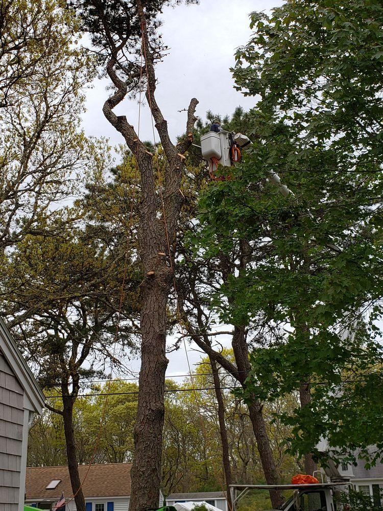 Mike Roma Tree Service: Harwich, MA