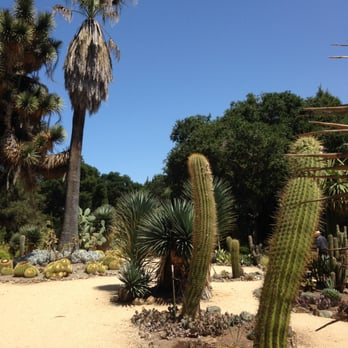 Photo Of The Arizona Cactus Garden At Stanford University   Stanford, CA,  United States