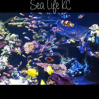 SEA LIFE Kansas City Aquarium - 86 Photos & 108 Reviews ...