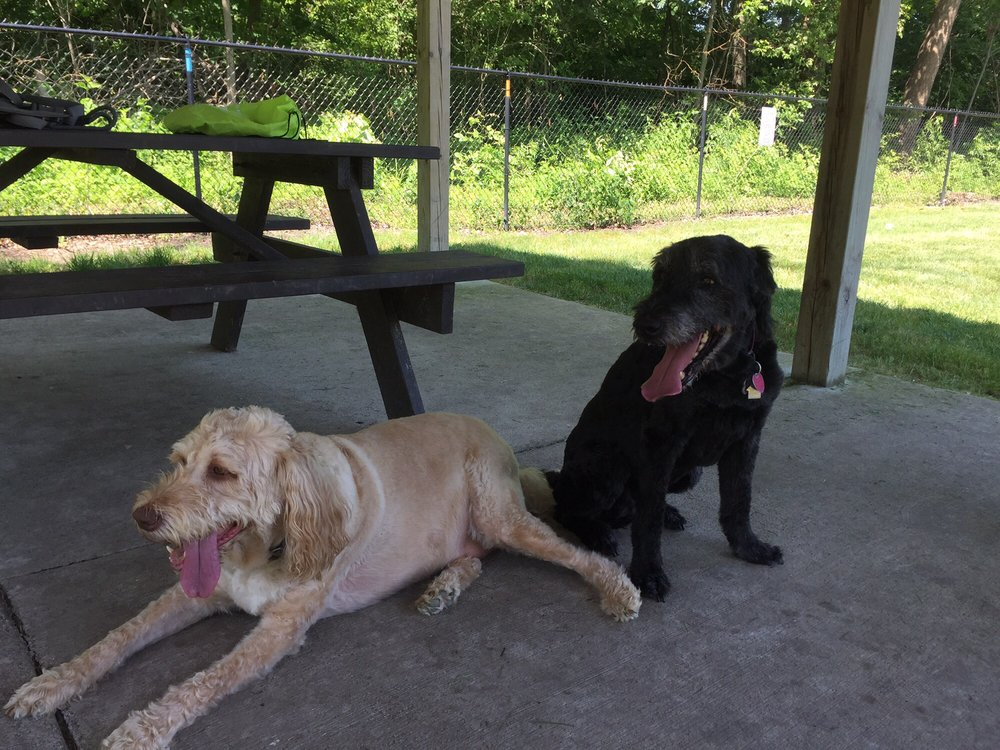 Four Paws Dog Park: 200 Legacy Blvd, Greenwood, IN