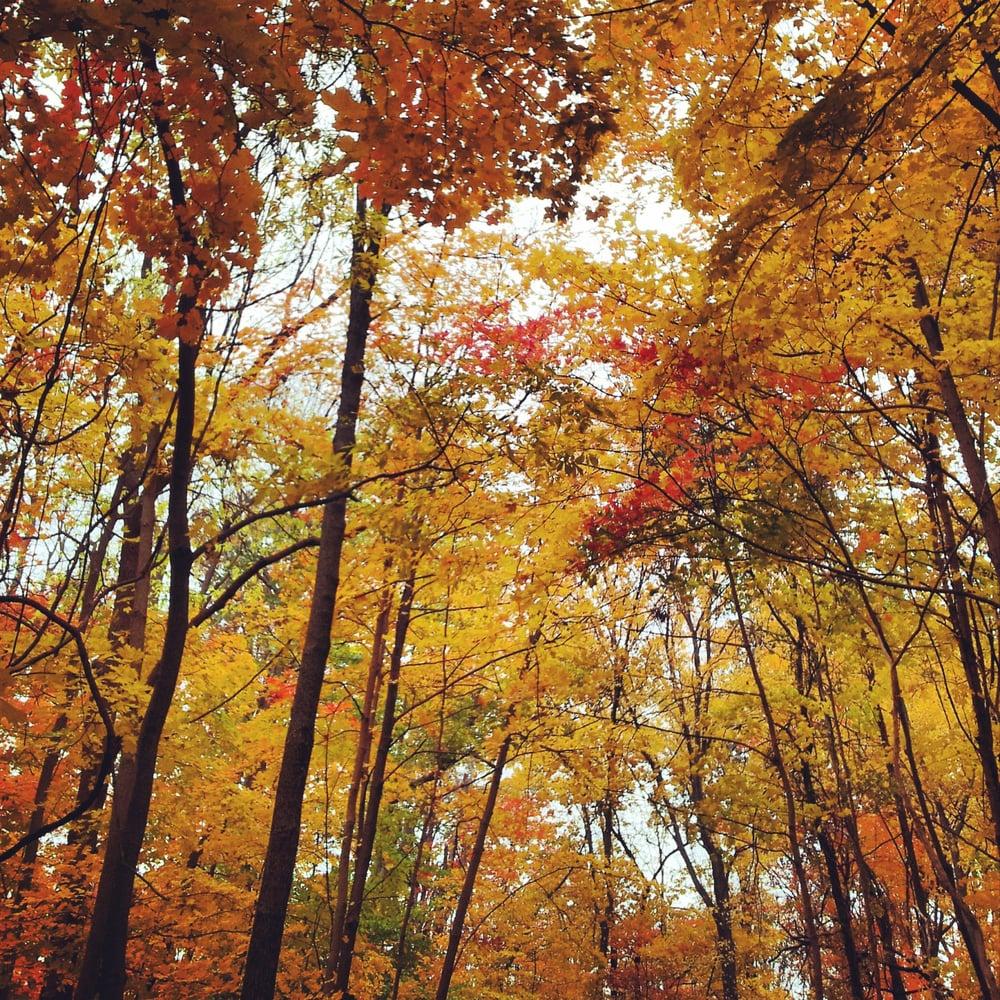 Sharon Woods Metro Park - 54 Photos & 38 Reviews - Parks - 6911 ...