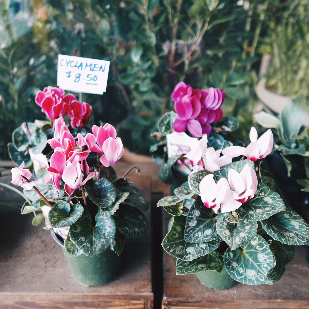 katsura garden - 67 photos & 69 reviews - nurseries & gardening