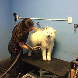 Doggie duds suds 26 photos 12 reviews pet groomers 177 w photo of doggie duds suds casa grande az united states solutioingenieria Gallery
