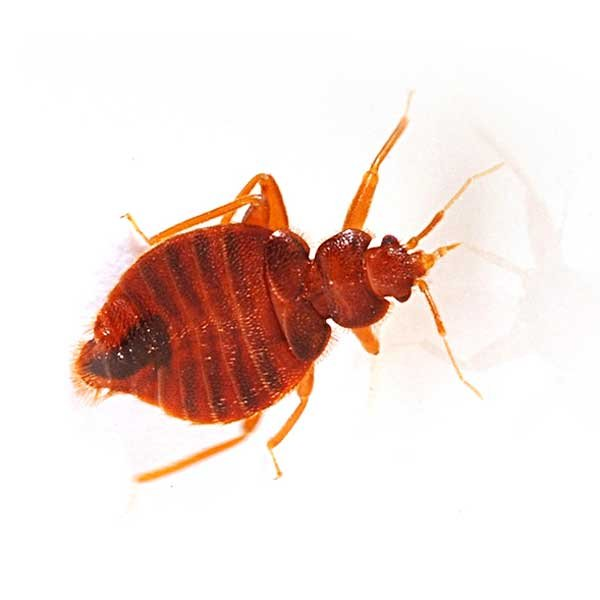 Pest Control Inc: 3642 N Rancho Dr, Las Vegas, NV
