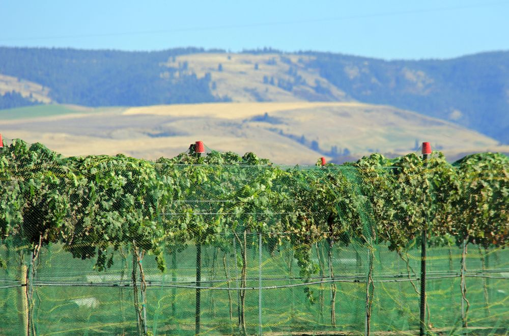 Twisted Vine Wine Tours: Lewiston, WA