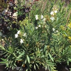 Perfect Photo Of Gardena Nursery U0026 Landscape Maintenance   Gardena, CA, United  States