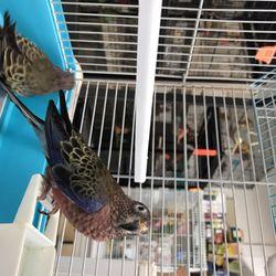 NJ Exotic Birds - 79 Photos - Pet Stores - 114 Rt 46 E