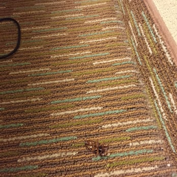 photo of hilton garden inn gainesville gainesville ga united states dead cockroach - Hilton Garden Inn Gainesville Ga