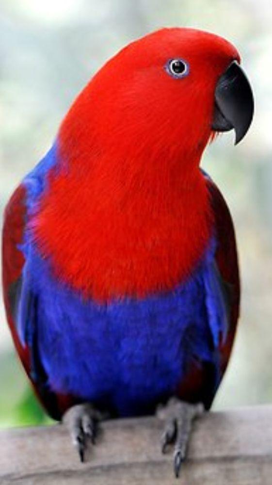 Clinica per animali e uccelli di Mission Viejo