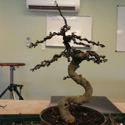 Photo Of Wigert S Bonsai North Fort Myers Fl United States My Plant