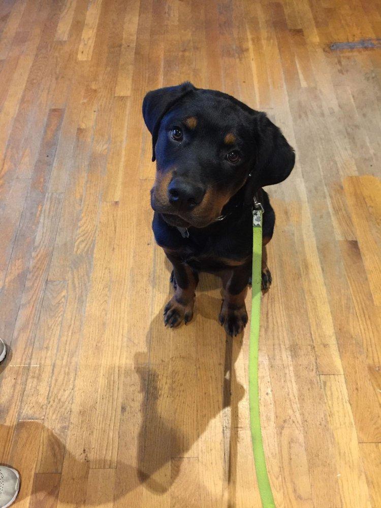 Canine Karma Training: Medford, NY