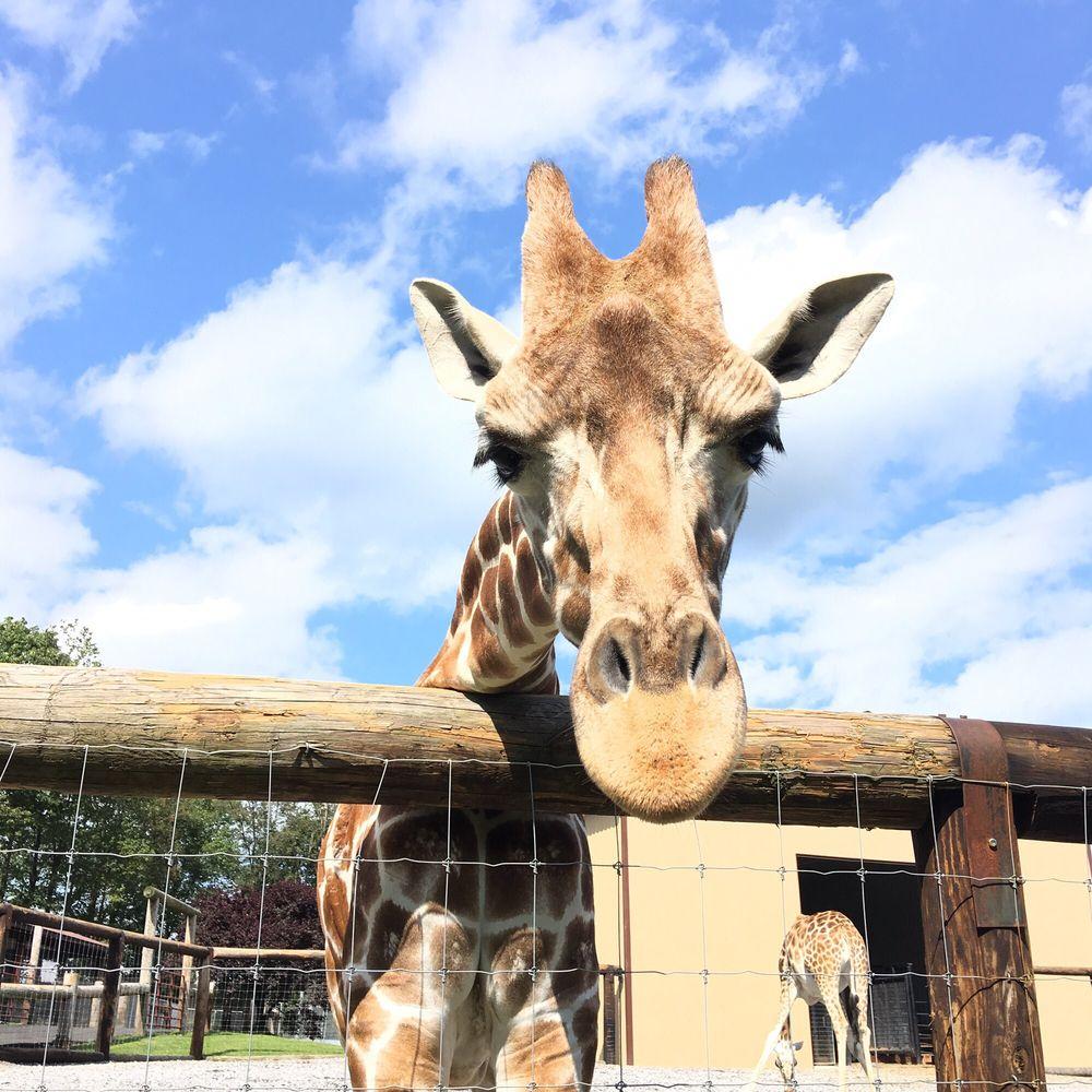 Hovatters Wildlife Zoo: 291 Wagner Ln, Kingwood, WV