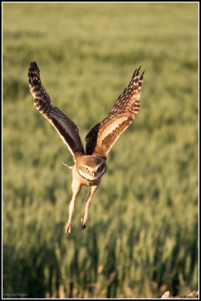 Eastern Washington Owl Tour Yelp