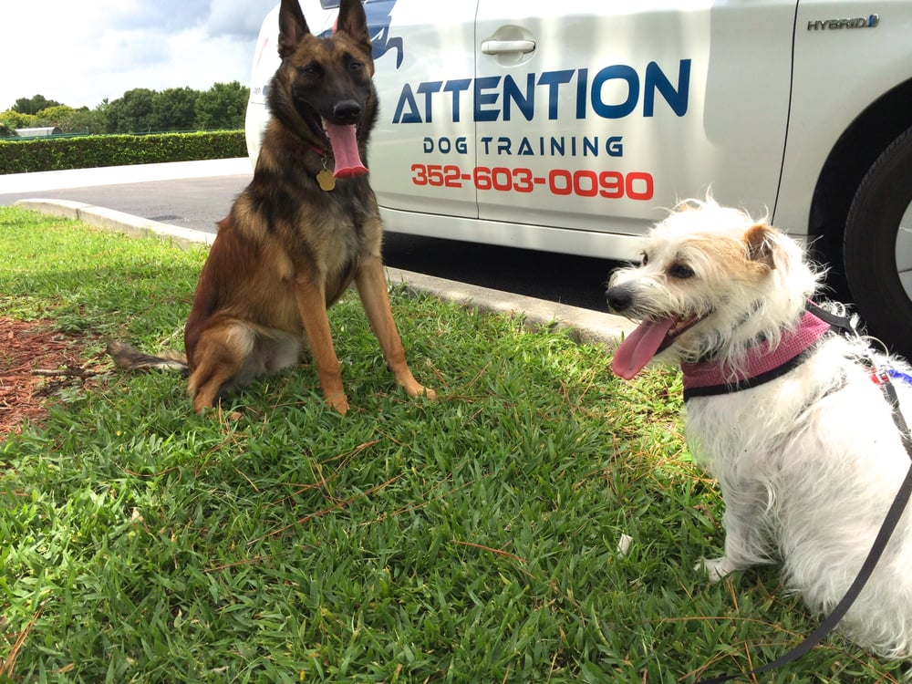Dog Training Clermont Fl