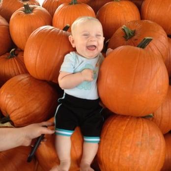 Photo Of Flamingo Road Nursery Davie Fl United States Pumpkin Patch