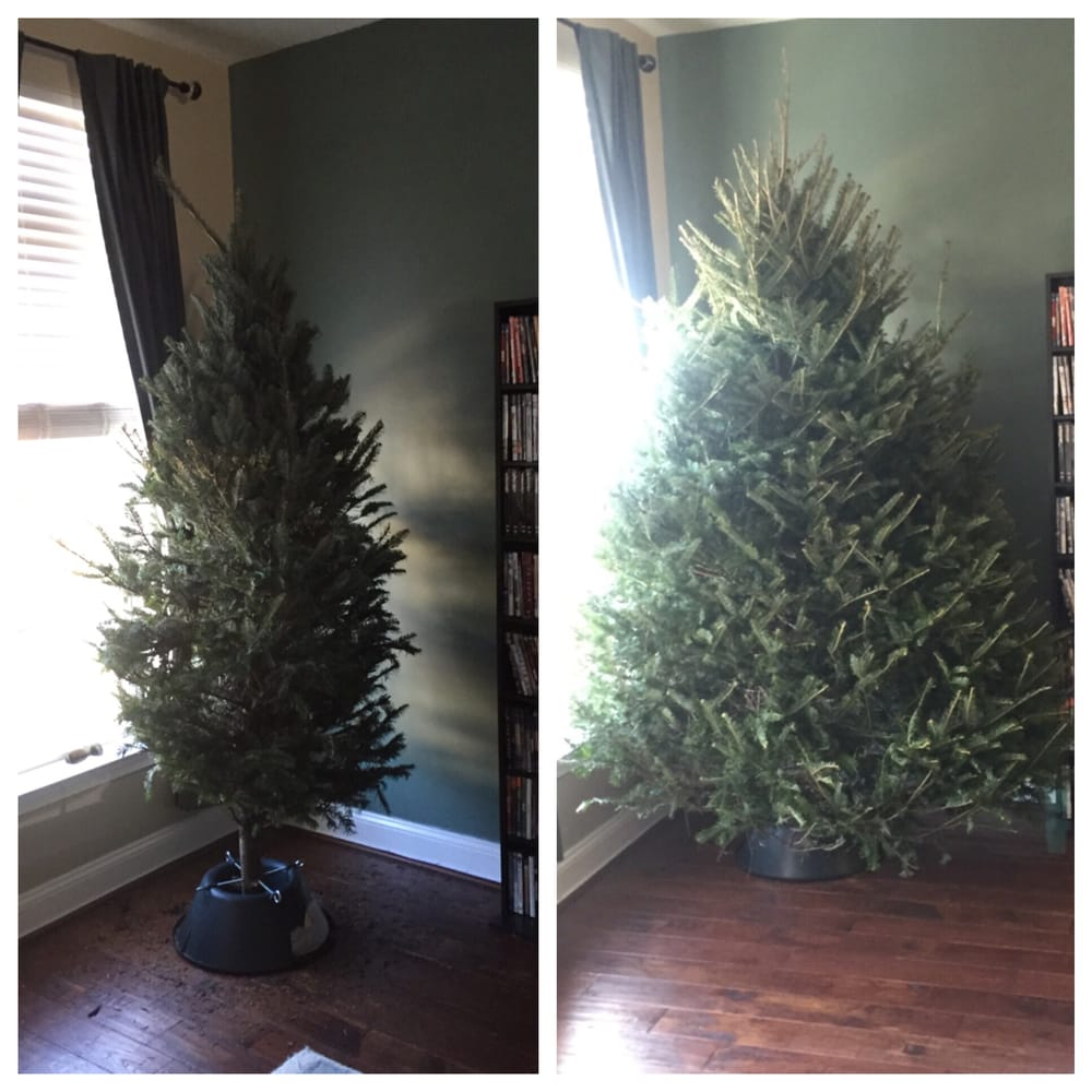 Costco Twinkling Christmas Tree: On The Left Is The Costco Christmas Tree We Bought...and