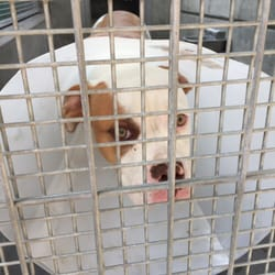 los angeles animal services west la shelter 88 photos 168