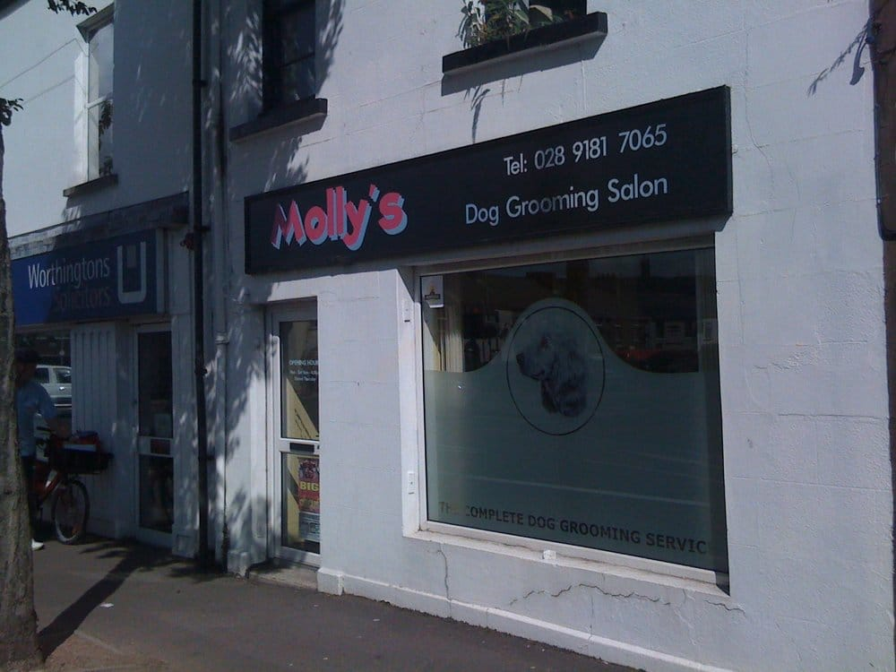 Photos for molly 39 s dog grooming salon yelp for Dog grooming salons near me