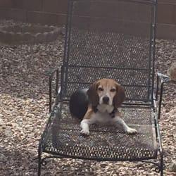 Photo Of ABC Pet Care Clinic
