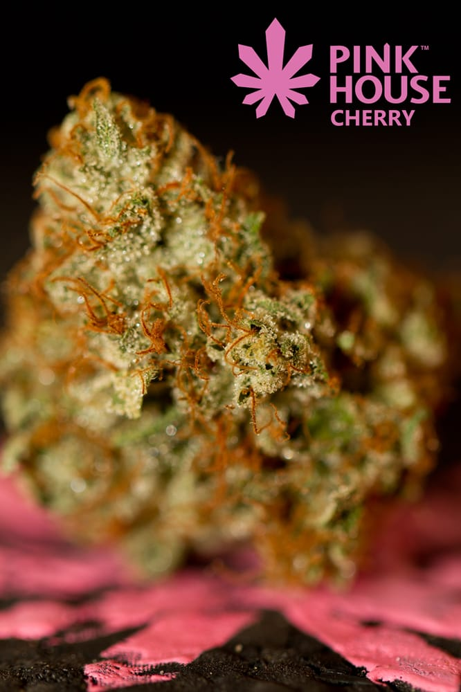 Photo Of Pink House Cherry Denver Co United States Yoda Og Grown