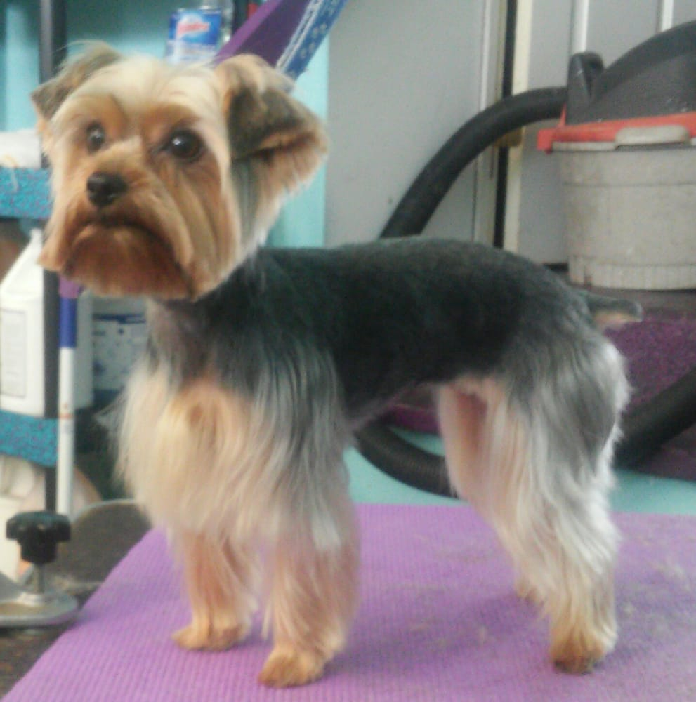 Pampered Pups Grooming Boutique: 7048 Linglestown Rd, Harrisburg, PA