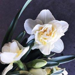 Photo of Dreisbach Wholesale Florist - Louisville, KY, United States ...