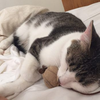 cat purr meow
