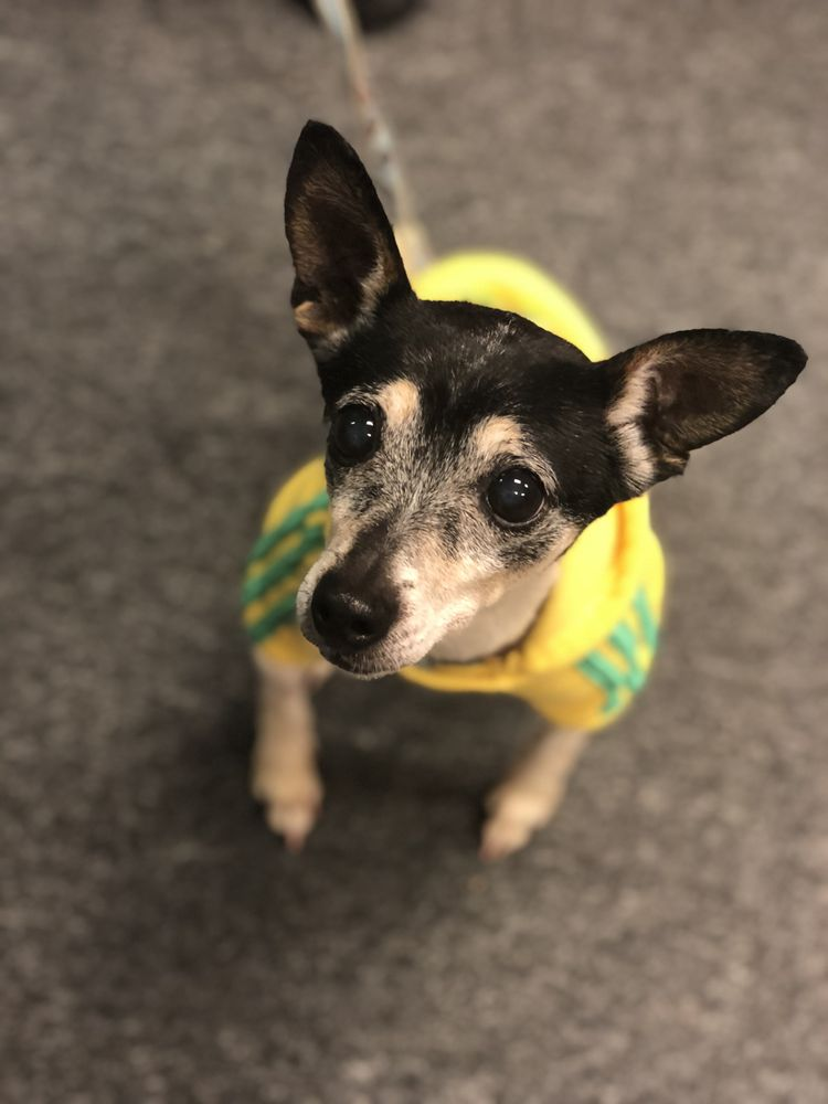 The Sanctuary For Senior Dogs: 4860 Broadview Rd, Cleveland, OH