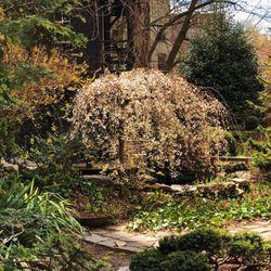 Photo Of 6BC Botanical Garden   New York, NY, United States ...
