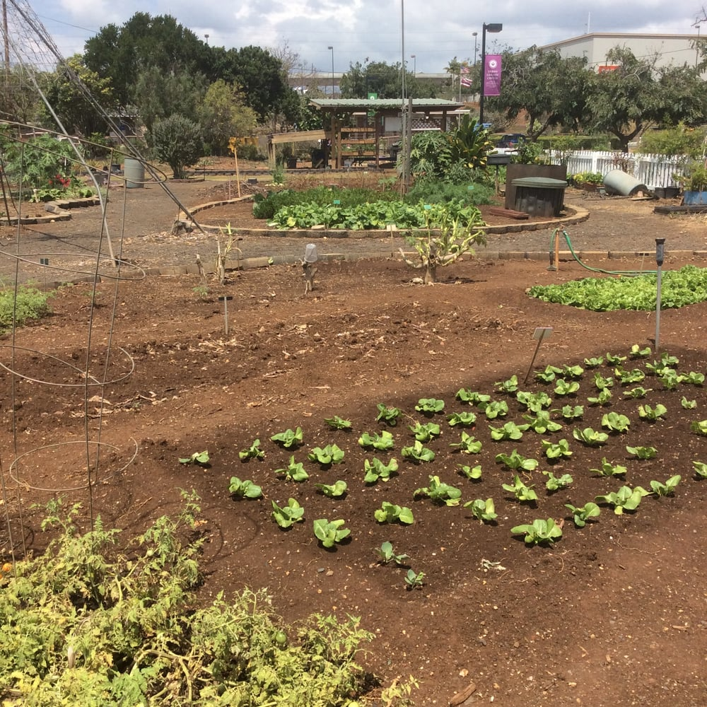 Photos For Oahu Urban Garden Center